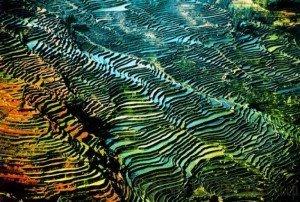 Yunnan rice terrace