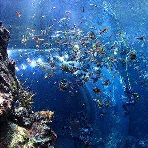 Aquarium Steinhart