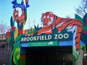 the Brookfield Zoo