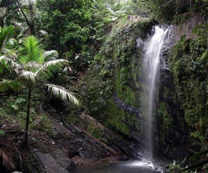 National Reserve El Yunque