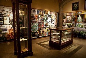 The Museum of Marijuana