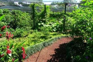 Butterfly Farm in Alajuela