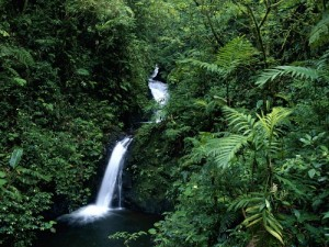 monteverde-cloud-forest-reserve-waterfall[1]
