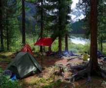 How to Plan Great Forest Holidays: 5 Tips for Tourists
